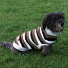Dog Pullover Hamilton - Size S: 40cm Back Length - Dog Clothing