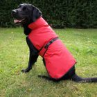 Dog Coat Authentic Red - 40cm back length