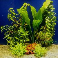 Aquariaplanten assortiment voor 60 cm aquaria - - 7 topp