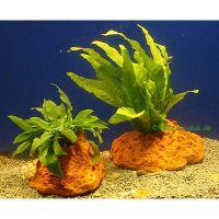 Gatenstenen met aquariumplanten - - 2 stuks