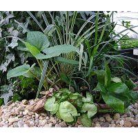 Terrariumplanten assortiment - - 5 planten