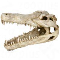 Schedel krokodil - - Grootte 14 cm