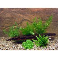Aquariumplanten garnalen en dwergkreeft assortiment - -