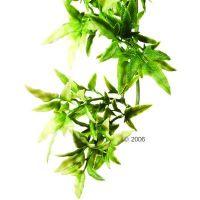 Hagen Exo Terra Croton - - Afmeting: lengte 45 / doorsne