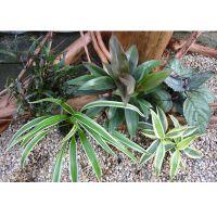 Gekleurde set voor vochtterrariums - - 5 planten