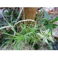 Groot vochtterrarium set - - 12 planten