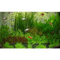 Asia onderwaterlandschap type 2 - - 63 planten