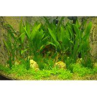Onderwaterlandschap gezelschapsaquarium hoekaquarium - -