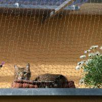 Trixie olijfkleurig bijtsterk kattenveiligheidsnet - - 6