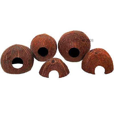 JBL Coconut Cava - 1/1 (Size M)