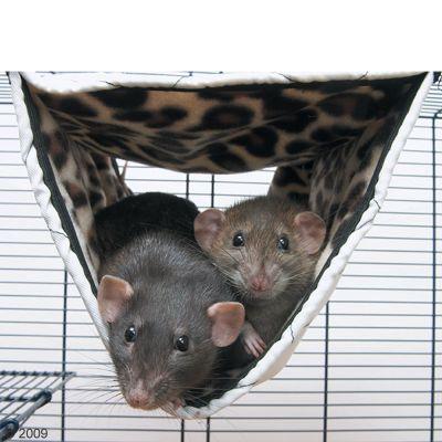 Hamac pour furet et rat Relax de Luxe Tube- L 44 x l  24 x H 24 cm