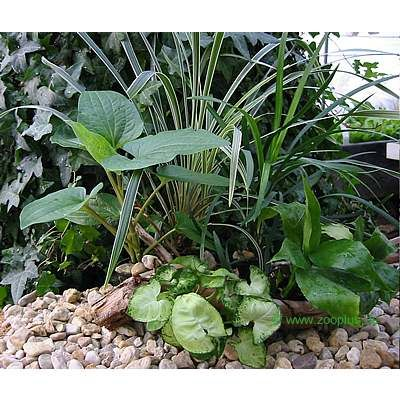 Terrarium Plants Assortment - 5 plants