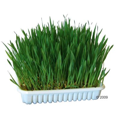 Herbe pour rongeur - 100 g