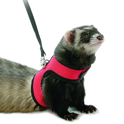 Marshall Neoprene Harness and Leash for Ferrets - red