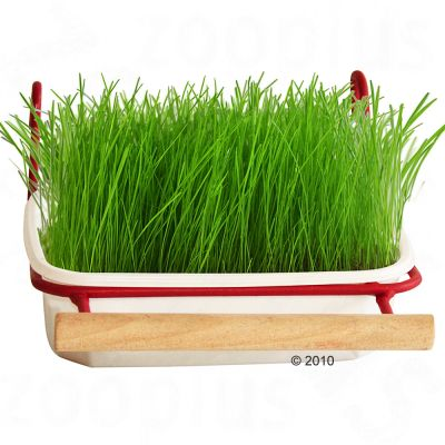 Bird Grass from Mucki - Bird grass refill pack