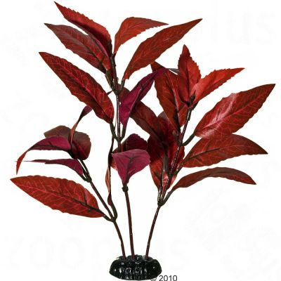 Alternanthera - plante aquatique artificielle- H 15 cm