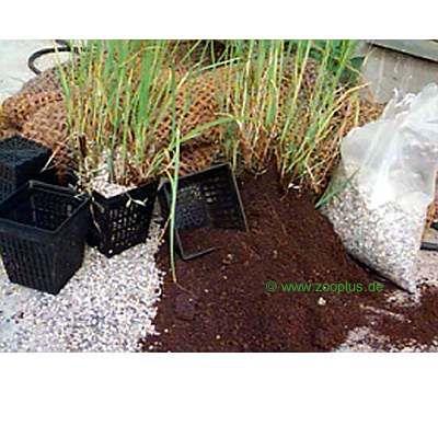Lot de plantes pour étang par Wakus- pour 8 plantes