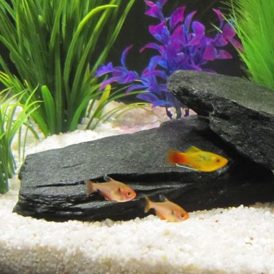 Shale Rocks  Aquarium Decorations - Black - approx. 2 kg, 1 - 4 Stones