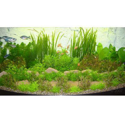asia unterwasserlandschaft typ 1 48 pflanzen. Black Bedroom Furniture Sets. Home Design Ideas