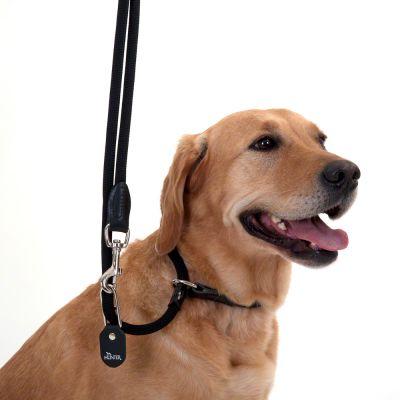 Laisse pour chien Hunter Retriever Freestyle- L 260 x l 1 cm (noir)