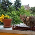 Outdoor Cat Net - Transparent - 4 x 3 m