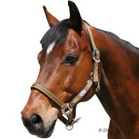 Pony Halster Supra - - Pony bruin/goud