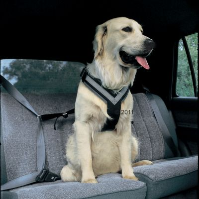 Allsafe Dog Safety Belt  - Size L: for Large Dogs