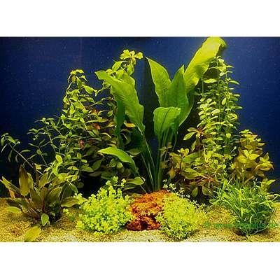 Lot de plantes pour aquarium de 80 cm- 10 plantes en pot