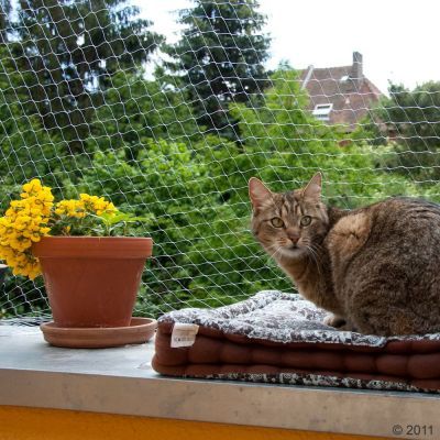 Outdoor Cat Net - Transparent - 2 x 1.5 m