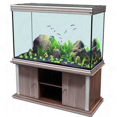 aquarium fische shop g nstig kaufen. Black Bedroom Furniture Sets. Home Design Ideas