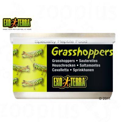Aliment pour reptiles Hagen Exo Terra Grasshoppers- 34 g