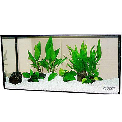 bruine aanslag op aquariumplanten