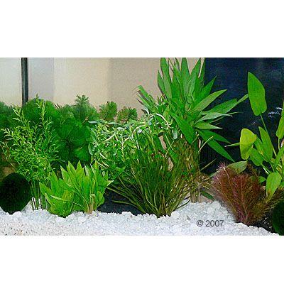 aquarienpflanzen zooplants guppy platy aquarium 15 pflanzen von no name. Black Bedroom Furniture Sets. Home Design Ideas