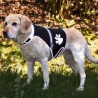 Trixie Flash Reflective Dog Coat  - Size S: 36  58 cm Chest Circumference