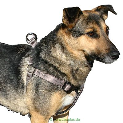 Trixie Dog Harness Elegance - Chest circumference 65 - 80 cm / 25 mm