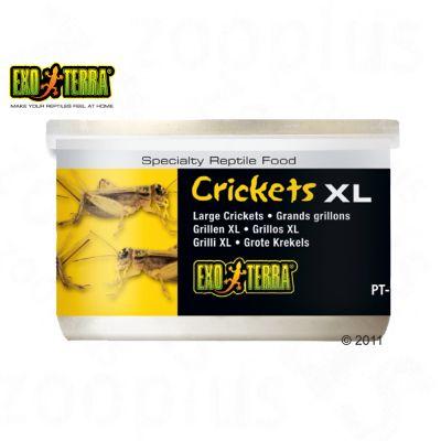 Aliment pour reptiles Hagen Exo Terra Crickets- 34 g