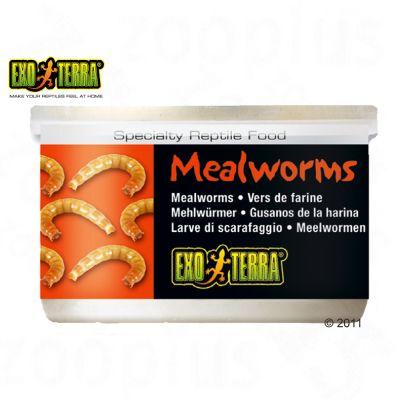 Aliment pour reptiles Hagen Exo Terra Mealworms- 34 g