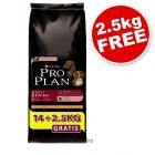 Pro Plan Bonus Bag 14 kg + 2.5 kg Free! - Adult Large Breed Robust Chicken and Rice (16.5kg)
