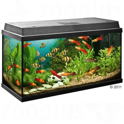 Acuario Juwel Rekord 800 - - Aprox. 110 litros (negro)