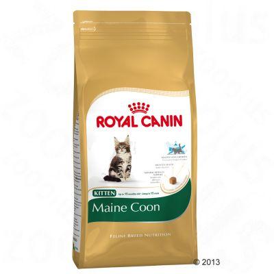Royal Canin Maine Coon Kitten - 4kg