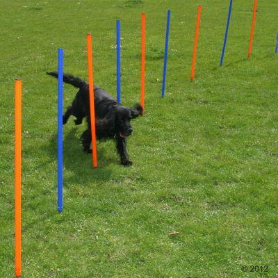 Fun & Sport Dog Agility Weave Poles - 12 Poles