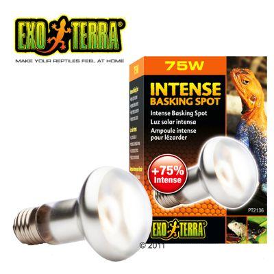 Ampoule lumière du jour Hagen Exo Terra Intense Basking Spot- 75 Watt