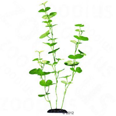 Hydrocotyle Aquarium Plant - 30 cm