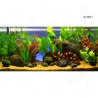 Aquariumplanten Zooplants Rood accent