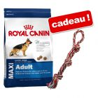 Croquettes Royal Canin 8 à 15 kg + corde double multicolore