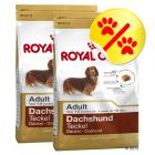 Dubbelpack Royal Canin Dachshund Adult