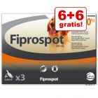 Fiprospot Spot-on  6 pipetten + 6 gratis!