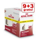 85 g Royal Canin Wet Nutrition - 9 + 3 GRATIS!