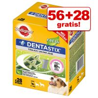 56 + 28 gratis! 84 Pedigree Dentastix Fresh
