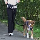 Hands Free Waist Dog Lead